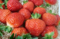 Fragaria x ananassa 'Salsa' Strawberry